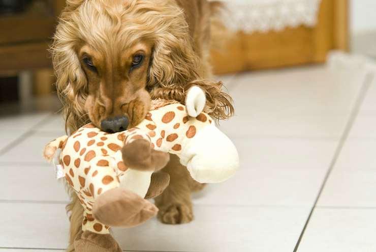 Il gioco preferito del cane (Foto Pixabay)