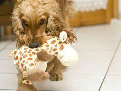Cane gioca con il giocattolo (Foto Pixabay)