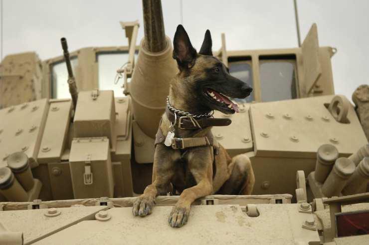 Cane sul mezzo di guerra (Foto Pixabay)