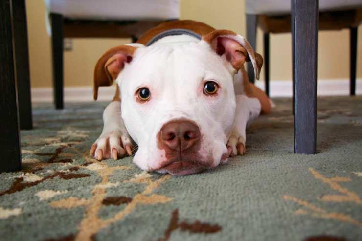 Legge sui cani nei locali (Foto Pixabay)