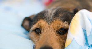 sintomi pericolosi cane