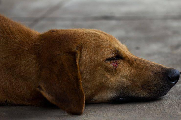 maltrattamenti animali reato