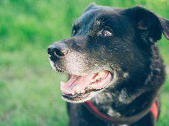 L'attesa del cane (Foto Pixabay)