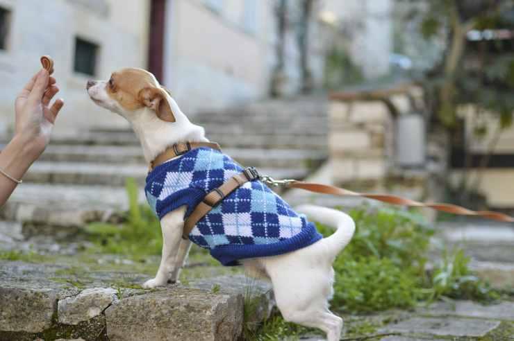 Il dolce cagnolino che ha fame (Foto Pixabay)