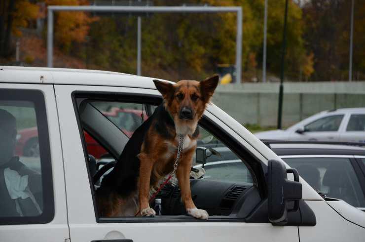 Cane che aspetta il padrone (Foto Pixabay)