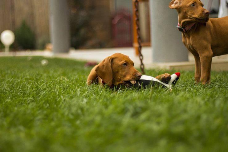 sepoltura cani in giardino