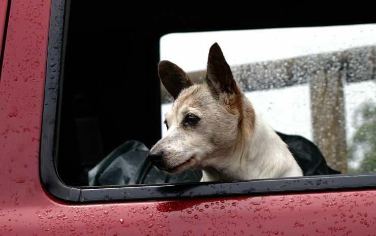 Cane triste in auto (Foto Pixabay)