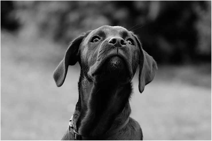 L'intelligenza del cane (Foto Pixabay)