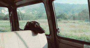 Cane chiuso in auto (Foto Pixabay)