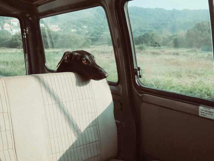 Cane nell'auto (Foto Pixabay)