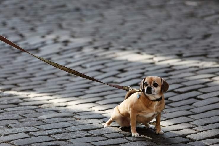 evitare rischi guinzaglio cane