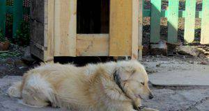 maltrattamenti cani