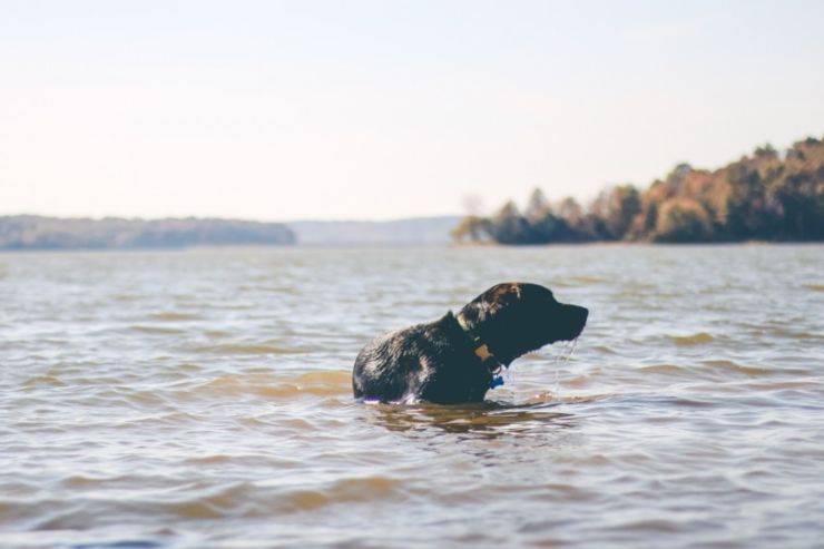 cane in pericolo cade nel fiume