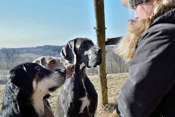 Tre cani che ascoltano il padrone (Foto Pixabay)