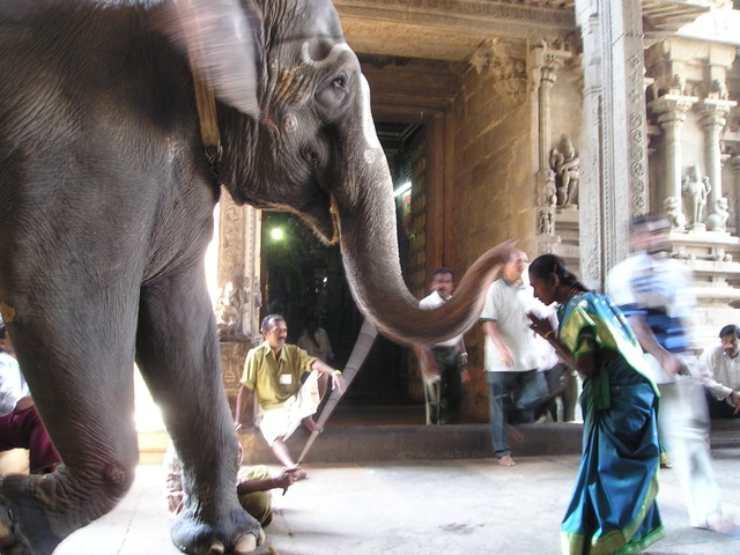 elefante uomo