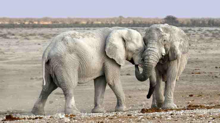 Elefante, animale sensibile e socievole (Foto Pixabay)