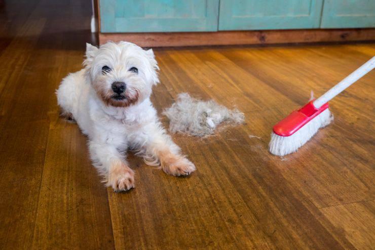 eliminare peli degli animali in casa