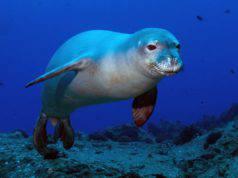cucciolo foca monaca Italia