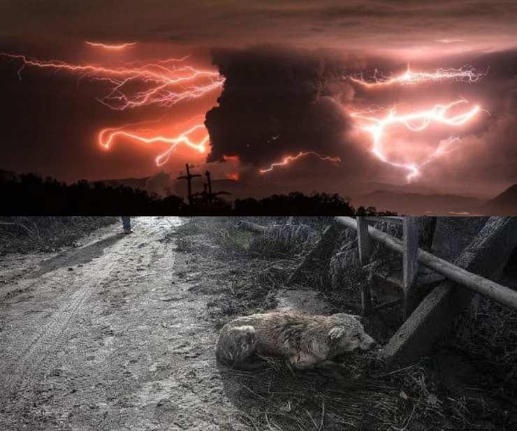 Filippine eruzione vulcano animali