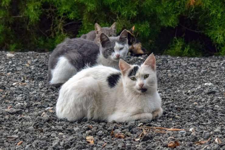 gatti gattara