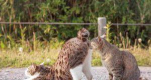 gatti si annusano le parti intime