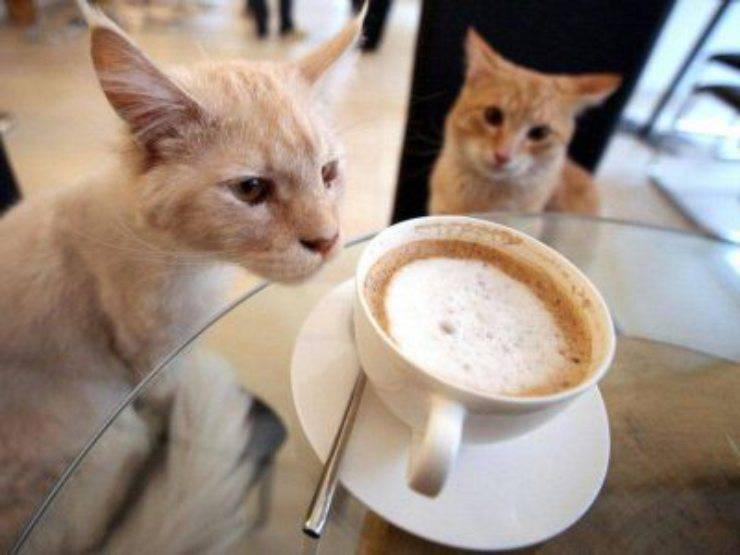 alimenti dannosi per gatti