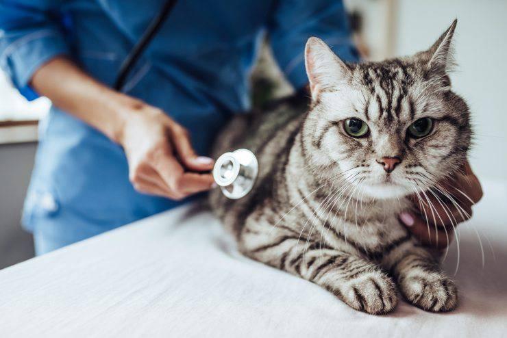 gatto a controllo