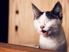 gatti ridono