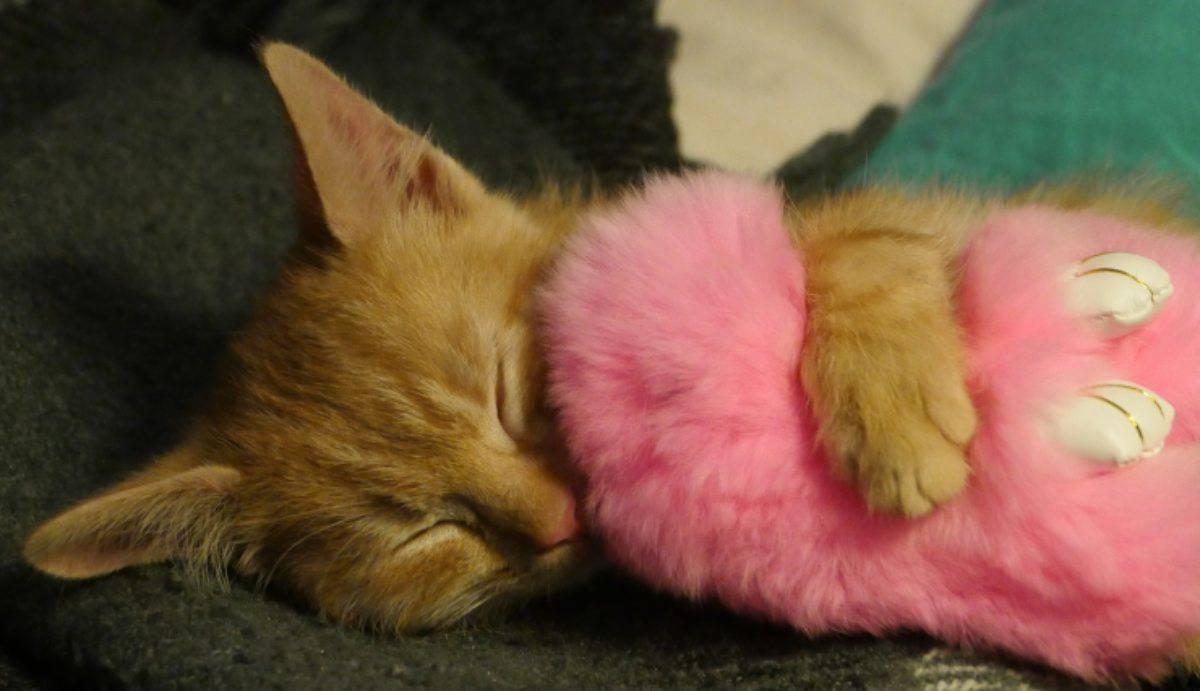 Giardia decât sintomi gatti. Giardia decât sintomi gatti, Tratamento o oxiurus