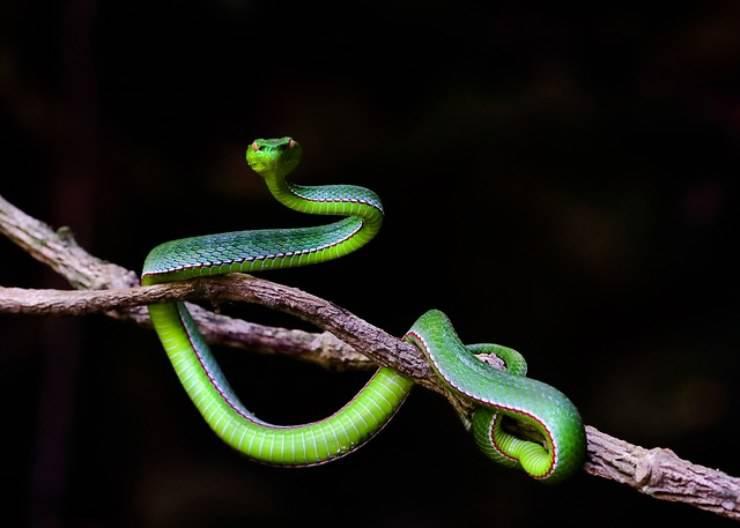 serpente sognare sogno