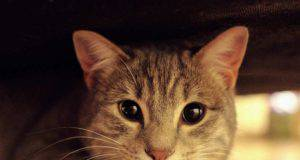 Gattina e lo sguardo tenero (Foto Pixabay)