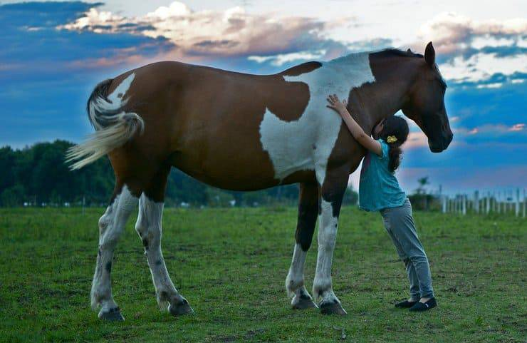 Abbraccio con il cavallo (Foto Pixabay)