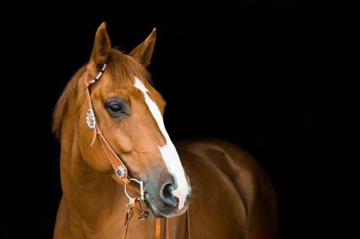 Il cavallo (Foto Pixabay)