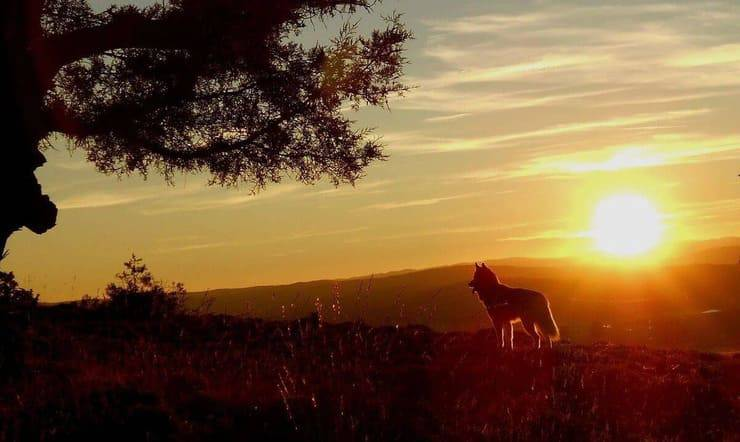 Husky al tramonto (Foto Pixabay)