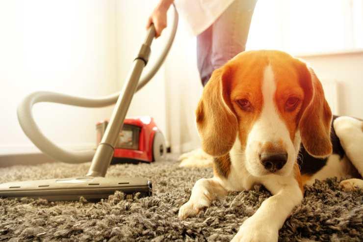 cattivo odore cane casa