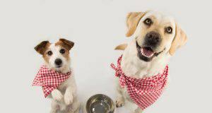 snack per cani fatti in casa