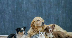 più animali domestici in casa