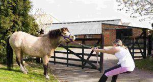 personalità cavallo