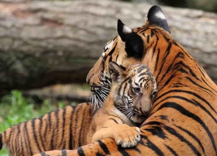 mamma e figlio (Foto Istock)