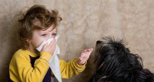 allergia ai cani maschi