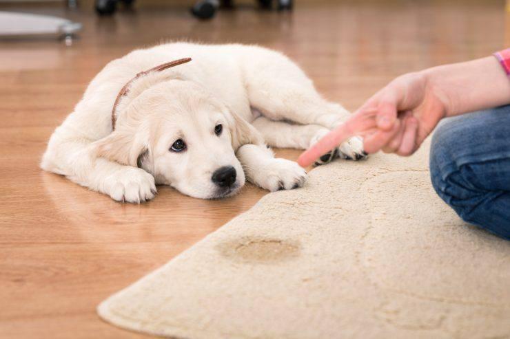 insegnare cucciolo bisogni fuori