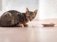 abitudini alimentari gatto