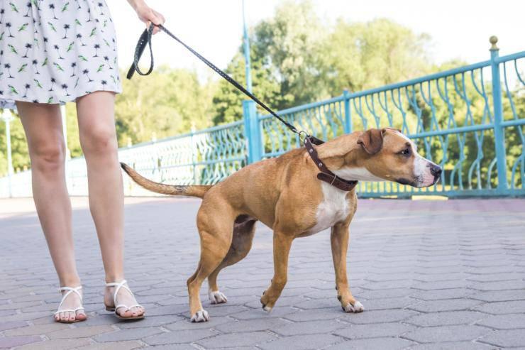 cane tira al guinzaglio rischi