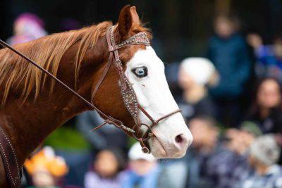 cavallo occhi azzurri
