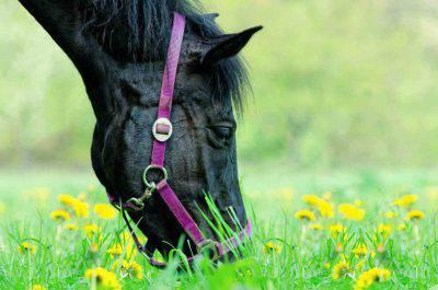 cane erba primavera