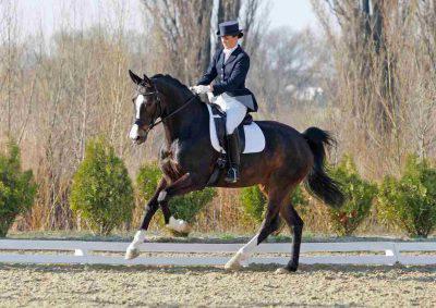cavallo dressage