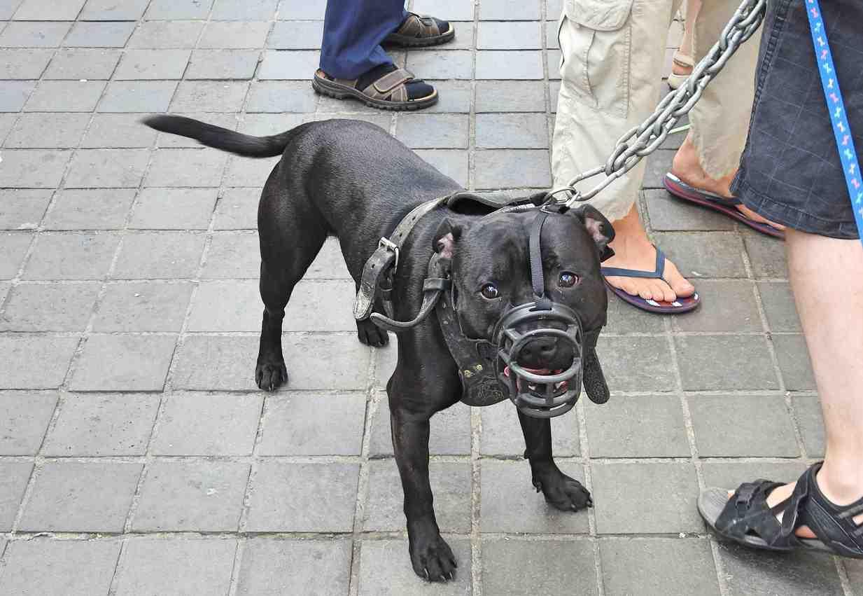 obbligo patentino per cani