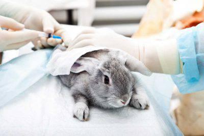 sperimentazione animali crudeltà