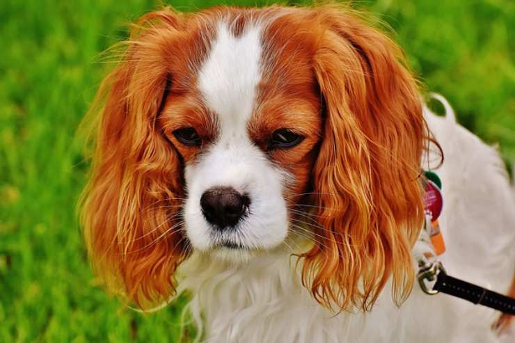 il vostro cane vi odia