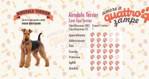 airedale terrier scheda razza
